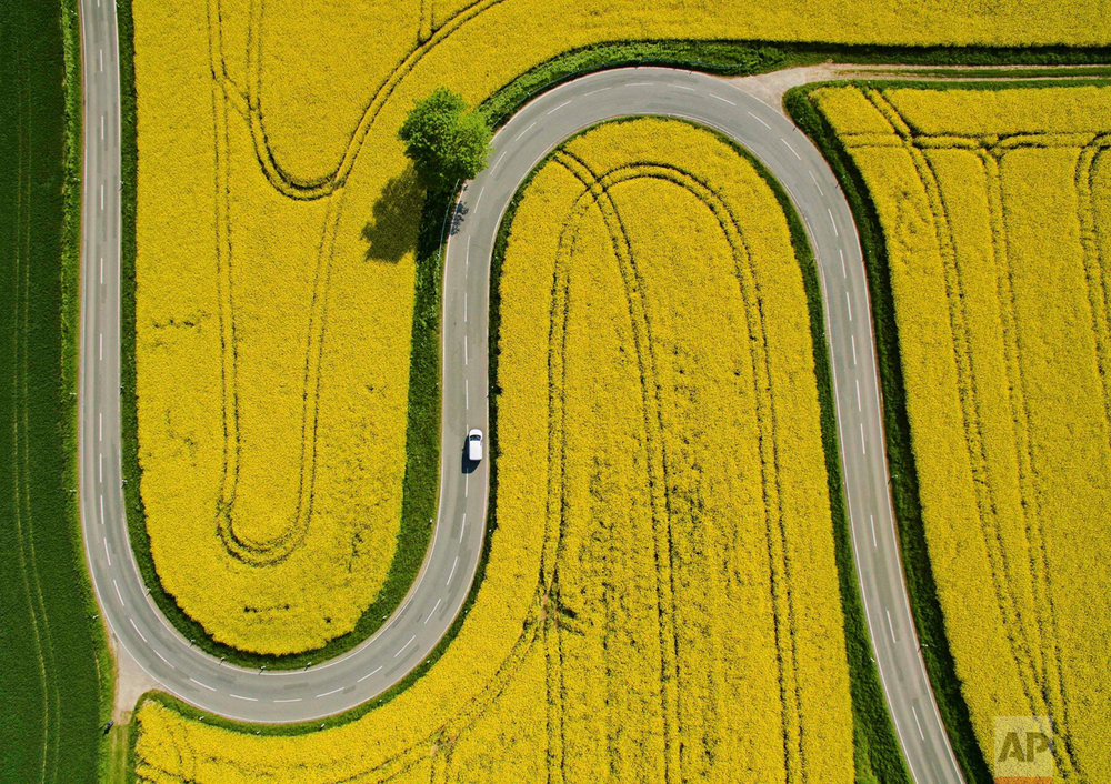 In this May 12, 2016 photo, a car makes its way on a winding road through flowering canola fields on the L401 highway near Nienstedt, Germany. (Julian Stratenschulte/dpa via AP)