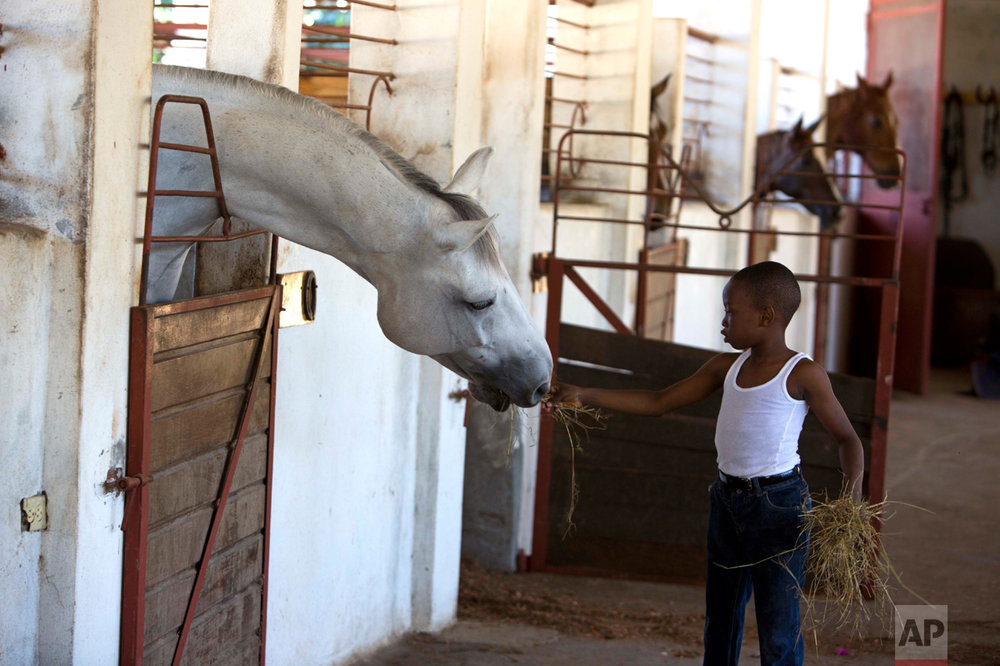 In this Jan. 11, 2017 photo, Judeley Hans Debel, who walks on a prosthetic right leg, feeds a horse at the Chateaublond Equestrian Center in Petion-Ville, Haiti. Judeley is one of a few dozen disabled people receiving therapeutic riding lessons at the center, according to his riding instructor, Louis Guerdes. (AP Photo/Dieu Nalio Chery)