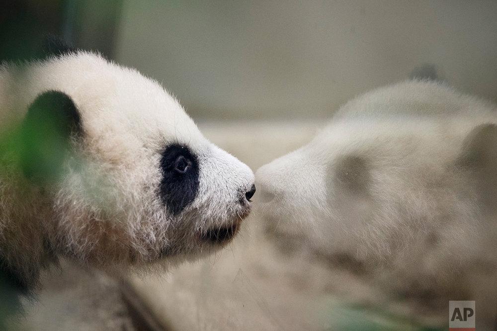 Spain Panda