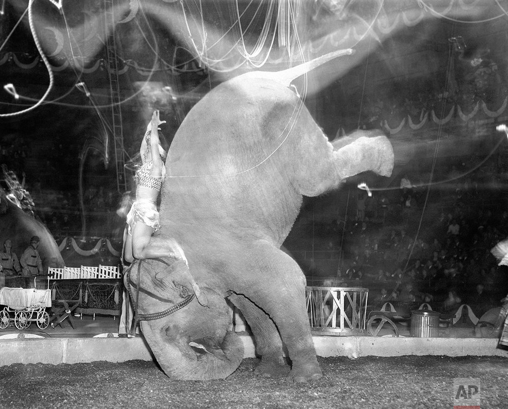 Elephant Performance 1949