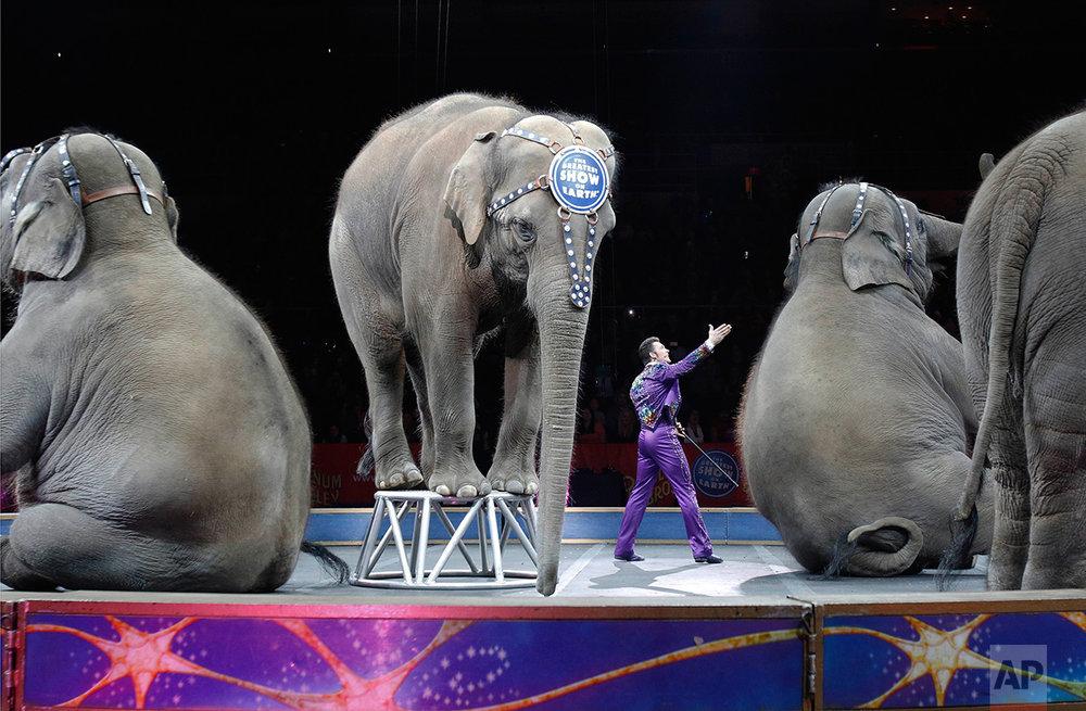 Last Circus Elephants 2016