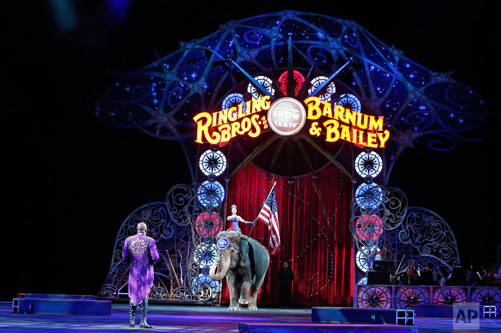 Ringling Bros Circus Elephants 2015