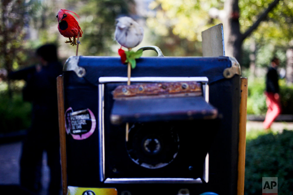 In this Aug.16, 2016 photo, plastic birds sit on the frame of Luis Maldonado's old wooden box camera in Plaza de Armas in Santiago, Chile. Maldonado uses the bird to call clients' attention when taking their portraits. (AP Photo/Esteban Felix)