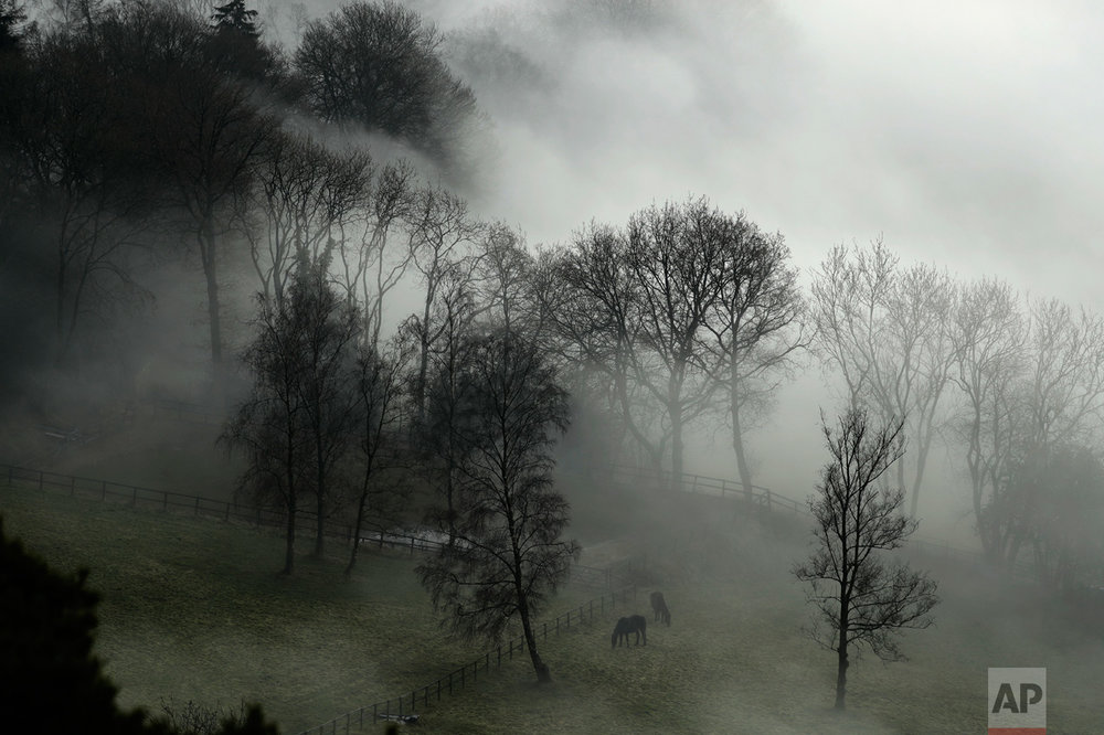 Horses graze in a paddock as fog envelopes the trees behind them near Leith Hill, England, in Surrey, southwest of London, Monday, Jan. 23, 2017. Thick fog has caused numerous flight delays and cancellations at London Heathrow and other area airports. (AP Photo/Matt Dunham)