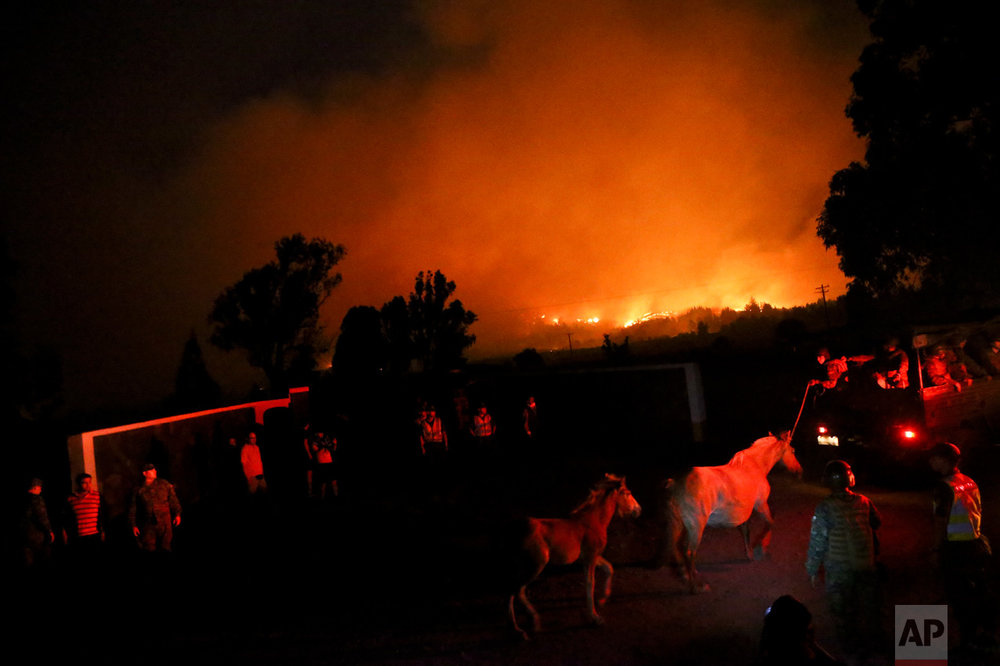 In this Sunday, Jan. 29, 2017 photo, a mare and her foal are led to safety as wildfires burn in Portezuelo, Chile. The fires have consumed forests, livestock and entire towns, leading President Michelle Bachelet to declare a state of emergency, deploy troops and ask for international help. (AP Photo/Esteban Felix)