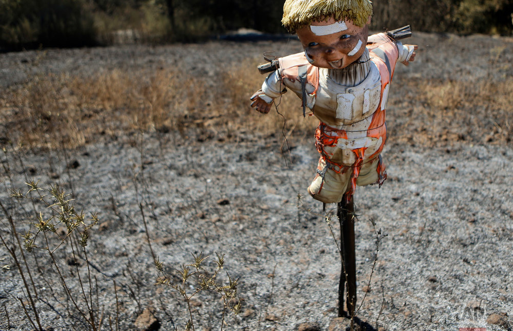 In this Saturday, Jan. 28, 2017 photo, a scarecrow doll stands in a scorched potato field destroyed by wildfires in Florida, Chile. Fires have been raging in central and southern Chile, fanned by strong winds, hot temperatures and a prolonged drought. (AP Photo/Esteban Felix)