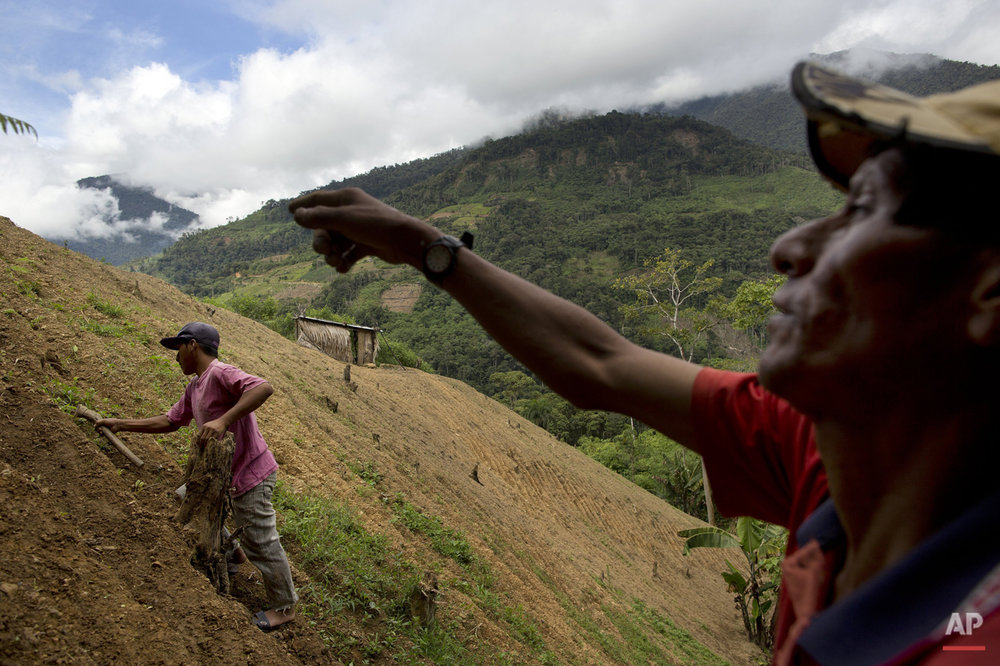 In this March 13, 2015 photo, coca farmer Alfredo Mosco, 44, right, instructs his young employee Donato Mosco, during the weeding of a coca field, in La Mar, province of Ayacucho, Peru. Hauling cocaine out of the remote valley is about the only way to earn decent cash in this economically depressed region where a farmhand earns less than $10 a day.  (AP Photo/Rodrigo Abd)