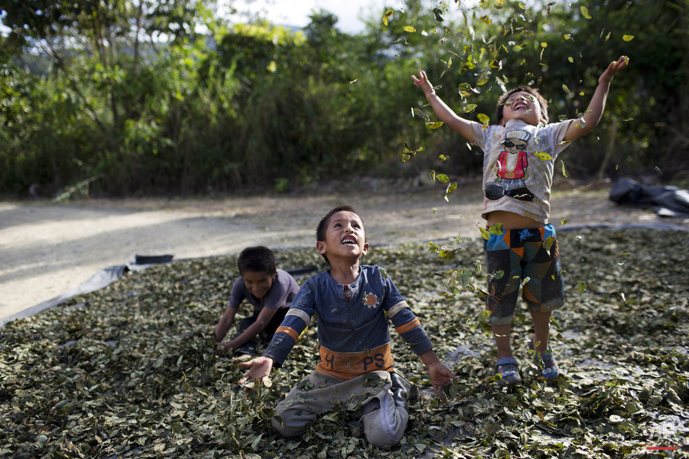 "In this March 13, 2015 photo,  Yohan, 4, from left, Cristian, 7, and Angelo, 6, playfully toss coca leaves into the air, singing: ""I have a lot of money, look at all the money I have,"" in La Mar, province of Ayacucho, Peru. Hauling cocaine out of the remote valley is about the only way to earn decent cash in this economically depressed region where a farmhand earns less than $10 a day. Beyond extinguishing young lives, the practice has packed Peru's highland prisons with cocaine backpackers while their bosses evade incarceration. (AP Photo/Rodrigo Abd)"