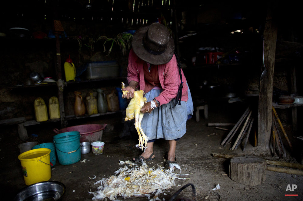 "In this March 15, 2015 photo, Rufina Miguel plucks a chicken in preparation for a special dinner to mark the second anniversary of her son's death, in La Mar, province of Ayacucho, Peru. Yuri, a cocaine backpacker, always checked in by phone she said. So when he didn't call after a March 2013 smuggling trip, his mother turned to reading coca leaves to try to divine his fate, tossing them on her skirt as is customary. ""The leaves fell spine-up, a bad sign,"" she said. (AP Photo/Rodrigo Abd)"