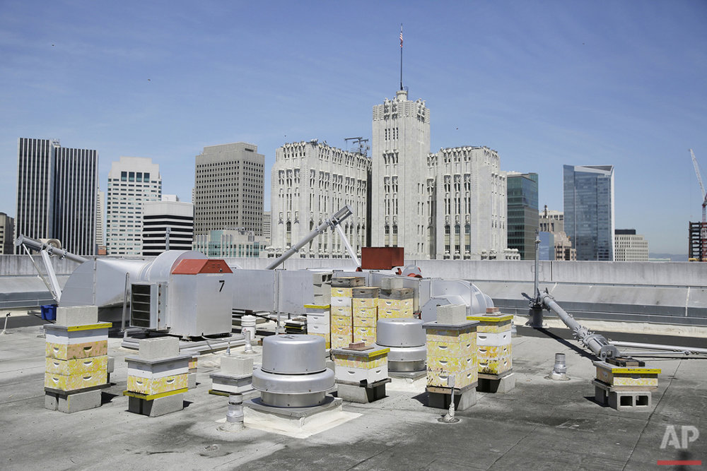 In this photo taken Monday, April 18, 2016, a number of beehives are seen on top of the W Hotel in San Francisco. (AP Photo/Eric Risberg)