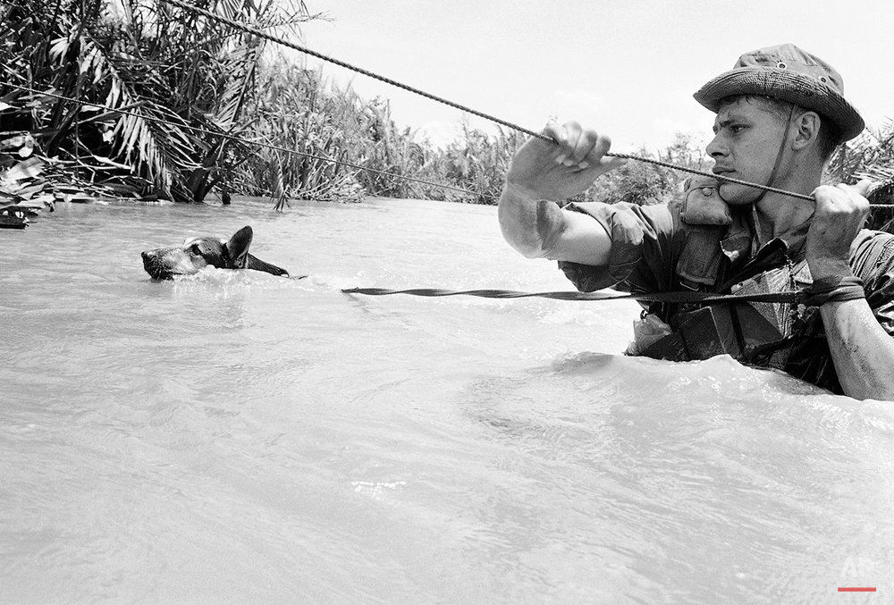 Scout Dog, fighting against a strong current, swims across a muddy stream during operation west of Saigon on Sept. 13, 1968. His handler uses cable to work his way across. Both are with a unit of the U.S. 199th light infantry brigade patrolling outside Saigon in terrain that is mostly muddy rice paddies and streams. (AP Photo)