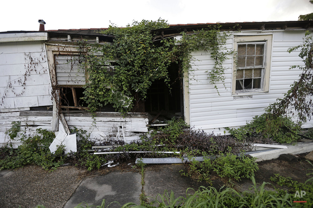 Plants grow on an abandoned home destroyed by Hurricane Katrina in a residential section of New Orleans East, Thursday, Aug. 6, 2015. (AP Photo/Gerald Herbert)