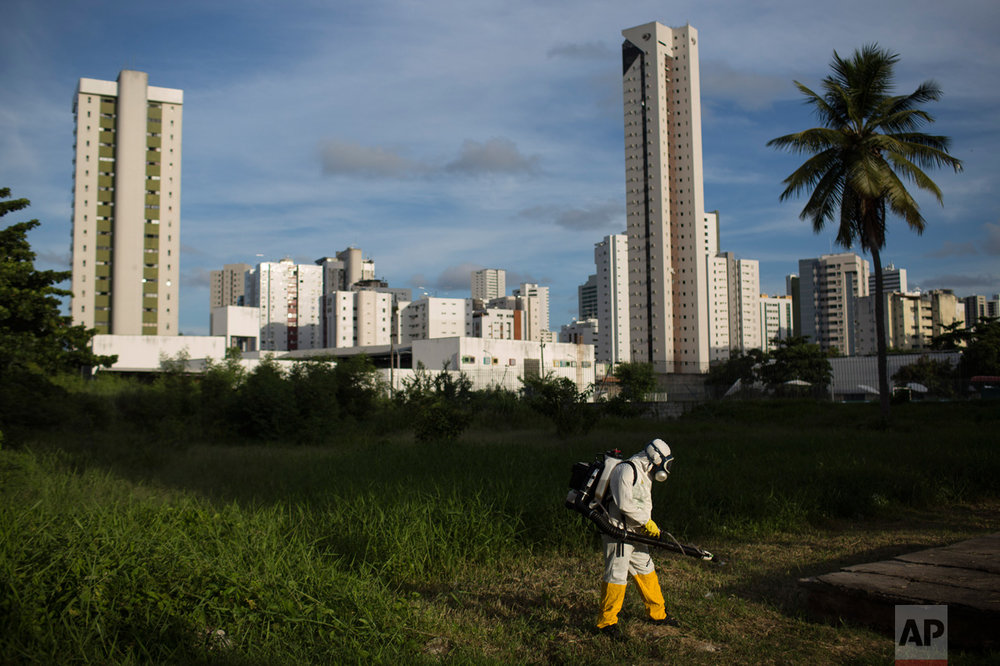 A municipal health worker sprays insecticide in an open area of a sports facility, to combat the Aedes aegypti mosquito that transmits the Zika virus, in Recife, Pernambuco state, Brazil, Thursday, Feb. 4, 2016. With no hope for a vaccine to prevent Zika in the near future, authorities are focusing on the most effective way to combat the virus: killing the mosquito that carries it. (AP Photo/Felipe Dana)