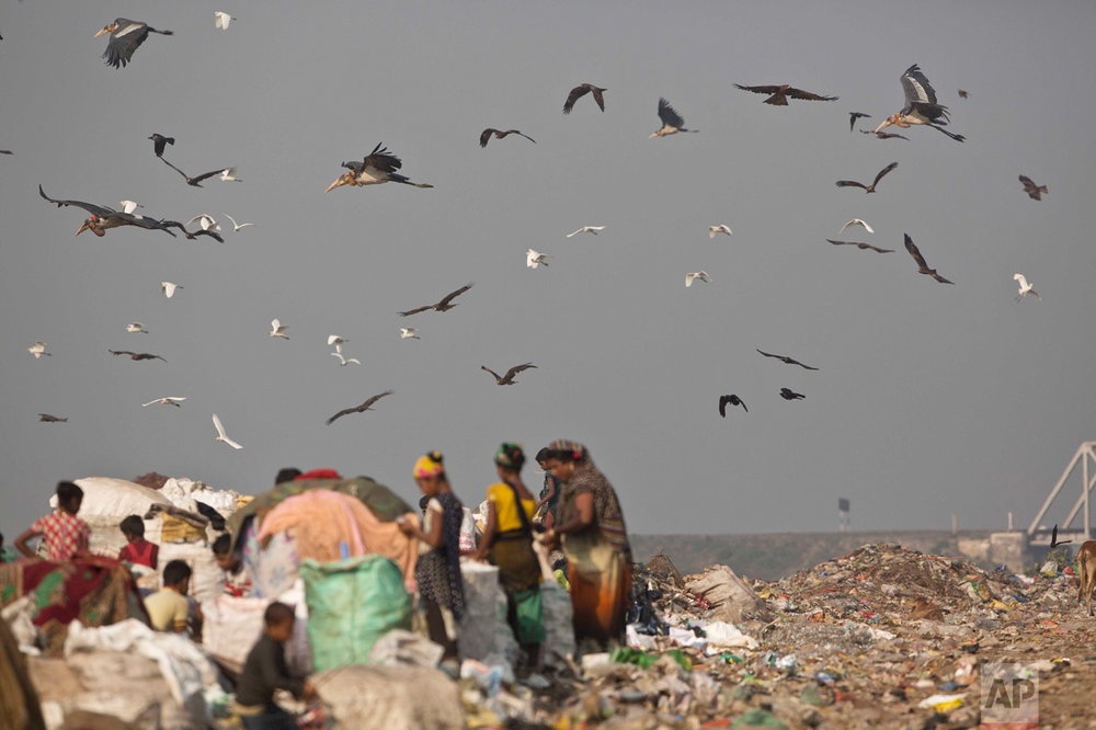 In this Jan. 24, 2017, photo, Greater Adjutant Storks and other birds fly over a garbage dumping site on the outskirts of Gauhati, India. For decades the big and awkward looking carnivore and scavenging bird was the object of revulsion in its home in northeast India until a group of women took it upon themselves to save the endangered bird. They called themselves the hargila army, for the bird's name in the local Assamese language. In January more than two dozen Greater Adjutant Storks were found dead in this. (AP Photo/Anupam Nath)