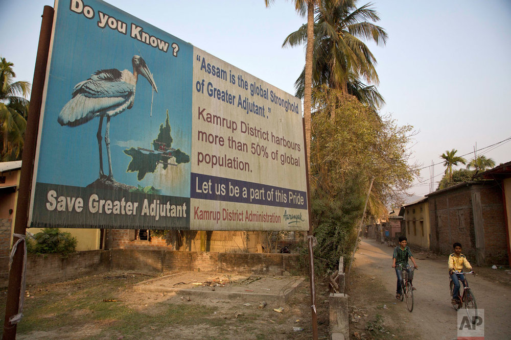 In this Feb. 6, 2017, photo, children ride past a billboard displaying the Greater Adjutant Stork, an endangered bird with a total population of 1,200 in the world, at Dadara village, west of Gauhati, India. A group of women have taken it upon themselves to save the endangered bird and call themselves the hargila army, for the bird's name in the local Assamese language. With about 800 birds Assam has the largest number of the Greater Adjutant Stork, concentrated largely in three villages just northwest of state capital Gauhati. (AP Photo/Anupam Nath)