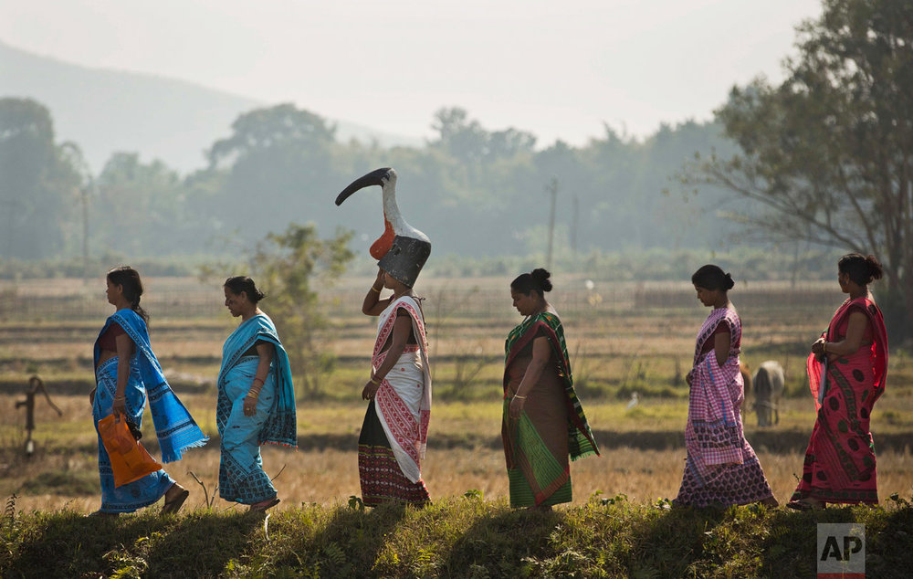 "In this Feb. 4, 2017, photo, a group of women from the ""hargila army"" walk to attend an awareness meeting on protecting the Greater Adjutant Stork in Dadara village, west of Gauhati, India. For decades the big and awkward looking carnivore and scavenging bird was the object of revulsion in its home in northeast India until a group of women took it upon themselves to save the endangered bird. Women from the hargila army, for the bird's name in the local Assamese language, pray, sing hymns, weave scarves and other items on their handlooms with the motifs of the bird, to create awareness about the need to protect the species. (AP Photo/Anupam Nath)"