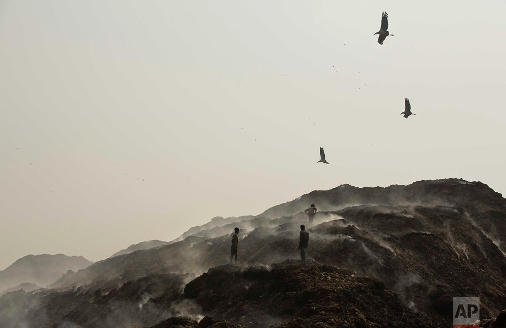 In this Jan. 24, 2017, photo, Greater Adjutant Storks fly over a garbage dumping site on the outskirts of Gauhati, India. For decades the big and awkward looking carnivore and scavenging bird was the object of revulsion in its home in northeast India until a group of women took it upon themselves to save the endangered bird. They called themselves the hargila army, for the bird's name in the local Assamese language. In January more than two dozen Greater Adjutant Storks were found dead in this. (AP Photo/Anupam Nath)
