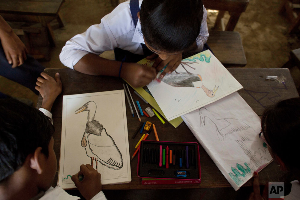 In this Feb. 6, 2017, photo, students of Sankardev Sishu Niketan school draw Greater Adjutant Storks, an endangered bird with a total population of 1,200 in the world, in their classroom at Dadara village, west of Gauhati, India. With about 800 birds Assam has the largest number of the Greater Adjutant Stork, concentrated largely in three villages just northwest of state capital Gauhati. Conservationists say they have launched a pride campaign among the children and youth so they can proudly say their village is home to the Hargilas, the name of the bird in local Assamese language. (AP Photo/Anupam Nath)
