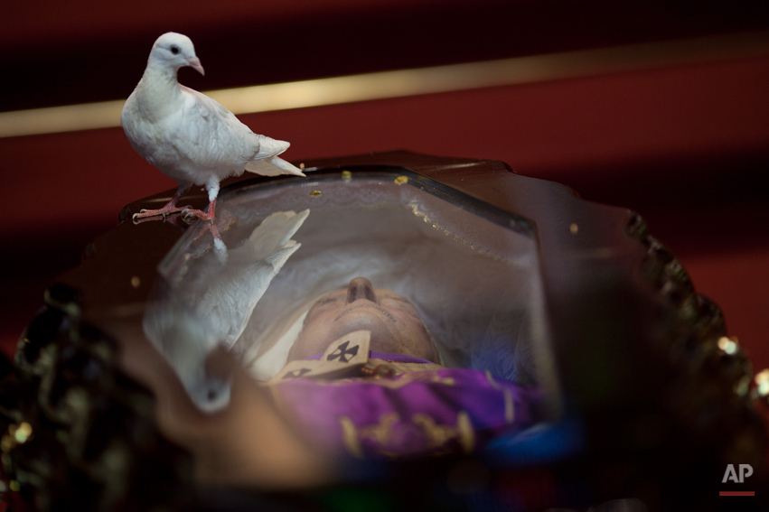 A dove perches on the glass top coffin of Brazilian Cardinal Eugenio Sales, during his funeral in Rio de Janeiro, Brazil, Tuesday, July  10, 2012. Sales, Archbishop Emeritus of Rio de Janeiro, provided shelter to thousands of opponents of the military regime that once ruled Brazil and to political refugees fleeing the dictatorships of Argentina and Chile. Sales died in his home late Monday night of a heart attack. He was 91. (AP Photo/Felipe Dana)