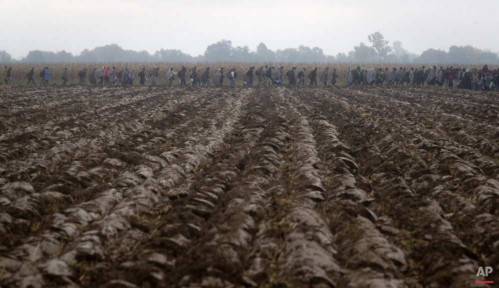 Migrants move through field after crossing from Croatia, in Rigonce, Slovenia, Sunday, Oct. 25, 2015.  (AP Photo/Darko Bandic)