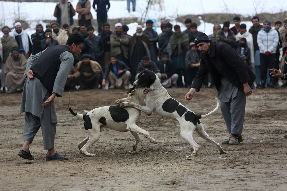Afghanistan Dogfighting