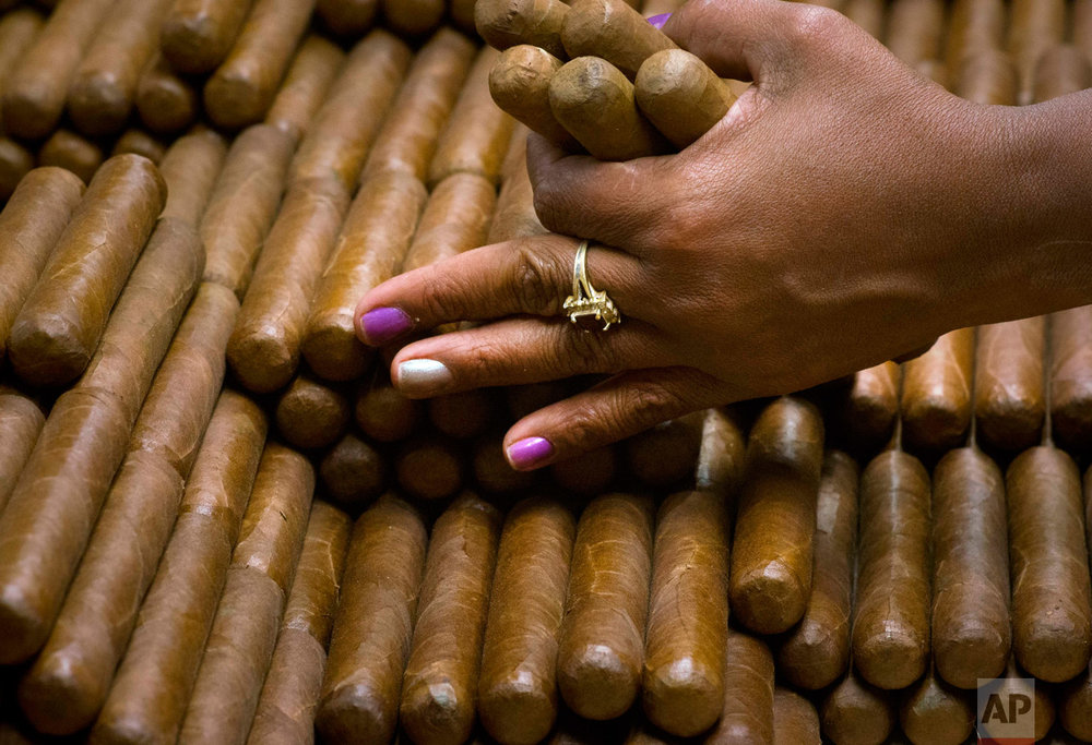 A sorter selects cigars at the H. Upmann cigar factory in Havana, Cuba, Thursday, March 2, 2017. Distributors abroad are reporting record sales, making cigar sales an important source of foreign revenue for the cash-strapped government. (AP Photo/Ramon Espinosa)