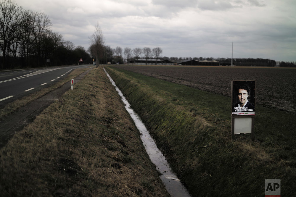In this Saturday, March 4, 2017 photo, an election poster showing Jesse Klaver, from the GroenLinks party, is displayed in a field in Nagele, Netherlands. March 15 marks the general election in the Netherlands. (AP Photo/Muhammed Muheisen)