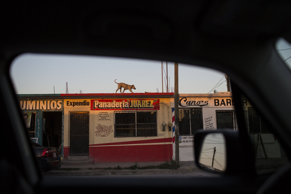 A guard dog paces the roof of a bakery in Matamoros, Tamaulipas state, Mexico, Wednesday, March, 22, 2017, across the border from Brownsville, Texas. (AP Photo/Rodrigo Abd)