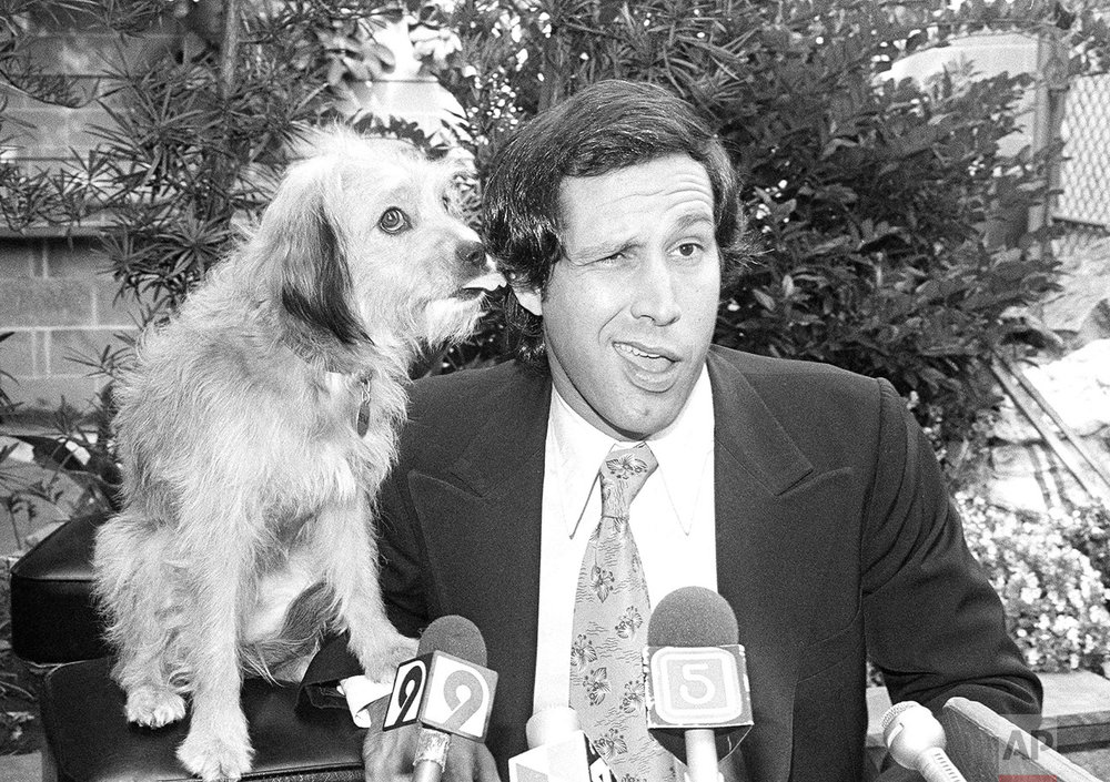 "Comedian Chevy Chase gets a kiss on his ear from co-star Benji as the two held a press conference in Los Angeles, Sept. 6, 1979, at which they announced their up-coming movie ""Oh Heavenly Dog"" would begin filming this month. The film will be shot on location in London, Berlin and Paris; but due to British quarantine laws a double will be used for Benji at the London location. (AP Photo/Nick Ut)"