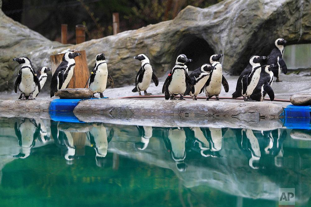 Georgia Zoo