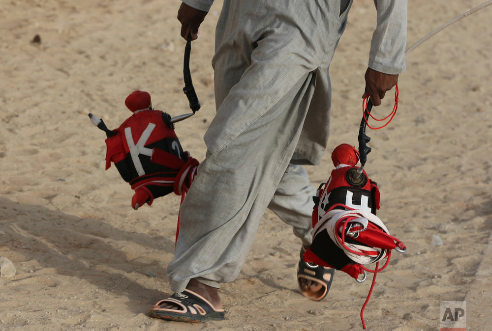 In this Saturday, April 8, 2017 photo, a camel keeper carries robotic jockeys ahead of a race at the Al Marmoom Camel Racetrack, in al-Lisaili about 40 km (25 miles) southeast of Dubai, United Arab Emirates. (AP Photo/Kamran Jebreili)