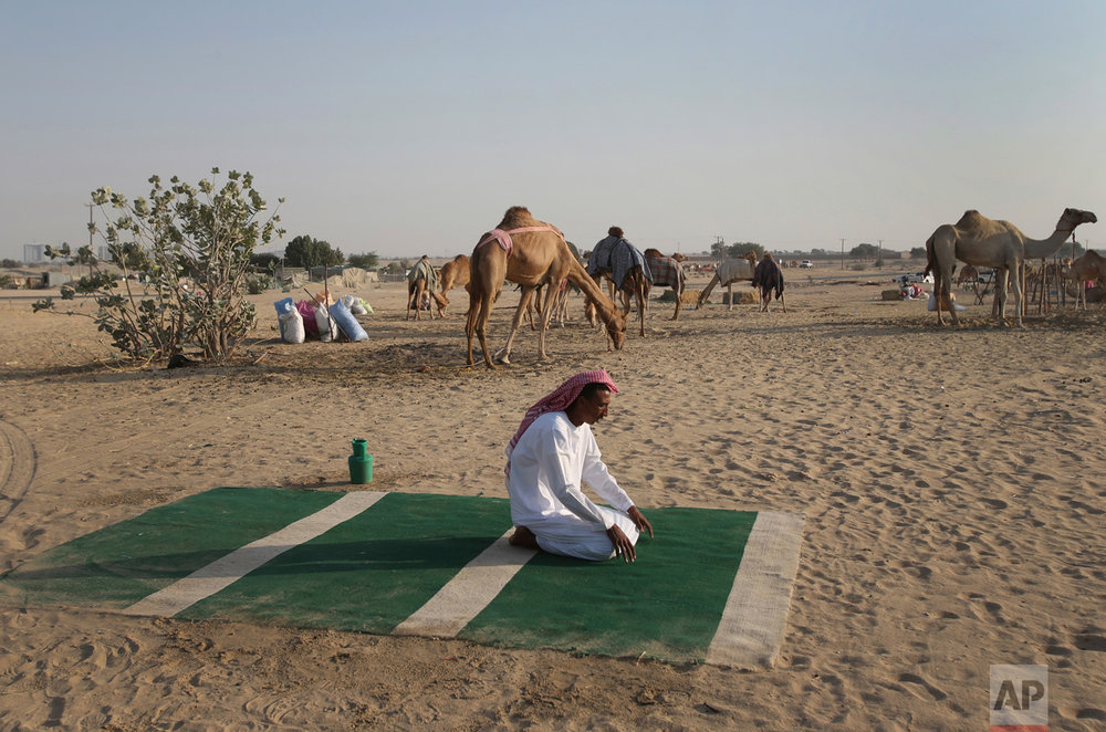 In this Jan. 30, 2017 photo, a Sudanese camel keeper, performs his afternoon prayers at a farm for female racing camels, in Dubai, United Arab Emirates. (AP Photo/Kamran Jebreili)