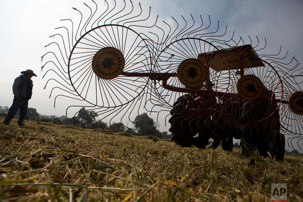 "In this March 17, 2017 photo, Silvino Garcia, 62, stands near a hay rake in his barley field after the cut stalks were turned to enable drying, on the banks of the Endho reservoir north of Tula in Hidalgo state, Mexico. Garcia is hoping the new wastewater treatment plant could eventually help clean the waste-water filled reservoir, which under the current plans will continue to receive untreated sewage. ""There are pros and cons,"" he says. ""Hopefully we will see fewer diseases and there could be less sickness among humans."" But he fears the plant will lower farm output and increase costs. (AP Photo/Rebecca Blackwell)"
