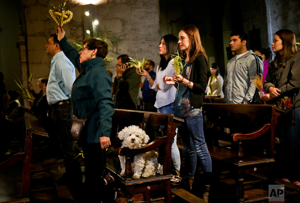 People take part in a Palm Sunday Mass at the San Francisco church in Santiago, Chile, Sunday, April 9, 2017. For Christians, Palm Sunday marks Jesus Christ's entrance into Jerusalem, when his followers laid palm branches in his path, prior to his crucifixion. (AP Photo/Esteban Felix)
