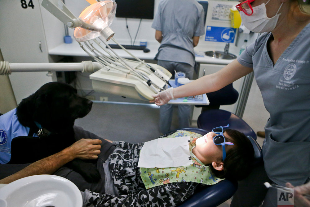 In this April 28, 2017 photo, therapy dog Zucca sits on the lap of 9-year-old Diego Rosales, who is autistic, during his dental visit to the Los Andes University Medical Center on the outskirts of Santiago, Chile. Before the use of therapy dogs, Rosales was so terrified during his dental appointments when he was 4 that he kept biting his dentist. (AP Photo/Esteban Felix)