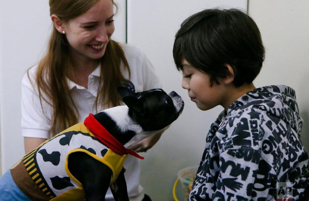 In this April 28, 2017 photo, 9-year-old Diego Rosales, who has autism, interacts with therapy dog Perry before his dental appointment at the Los Andes University Medical Center on the outskirts of Santiago, Chile. Veronica Narvaez, Diego's mother, said they had been turned away by other dentists because Diego was too restless, but now, with the presence of therapy dogs, he can't wait for his next appointment. (AP Photo/Esteban Felix)