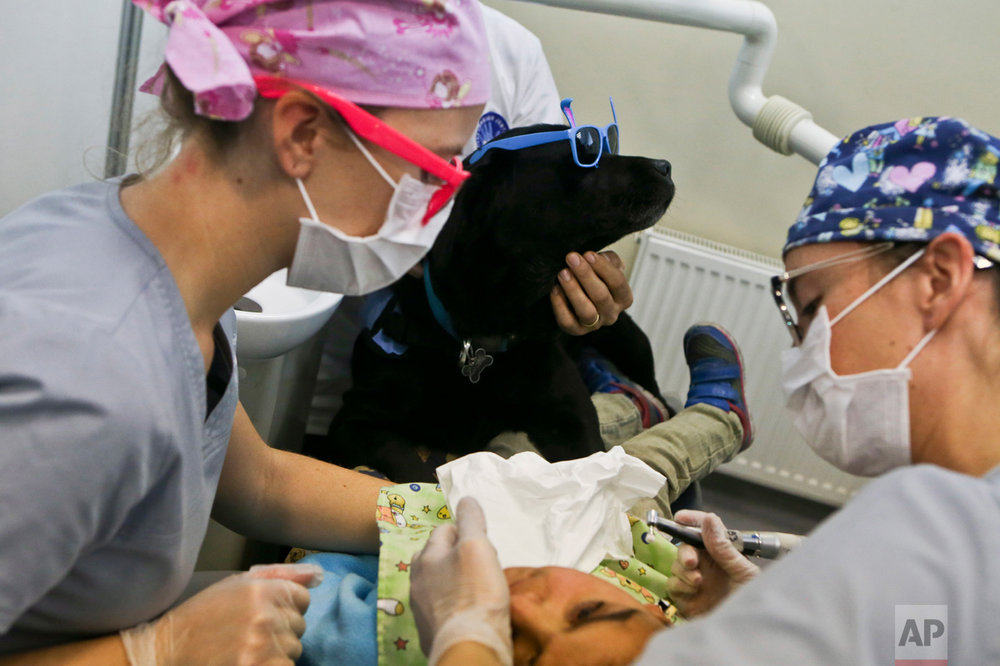 In this April 28, 2017 photo, 9-year-old Rayen Antinao gets a dental check-up as therapy dog Zucca helps keep her calm at the Los Andes University Medical Center, on the outskirts of Santiago, Chile. Autistic children can get upset by the lights in their faces and frightened by the noises of the instruments, but are soothed by the presence of specially trained dogs. (AP Photo/Esteban Felix)