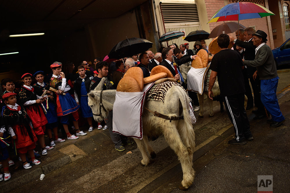 Participants carry giant bread on donkeys as they take part in the ceremony in honor of Domingo de La Calzada Saint (1019-1109), who helped poor people and pilgrims, in Santo Domingo de La Calzada, northern Spain, Wednesday, May 10, 2017. (AP Photo/Alvaro Barrientos)