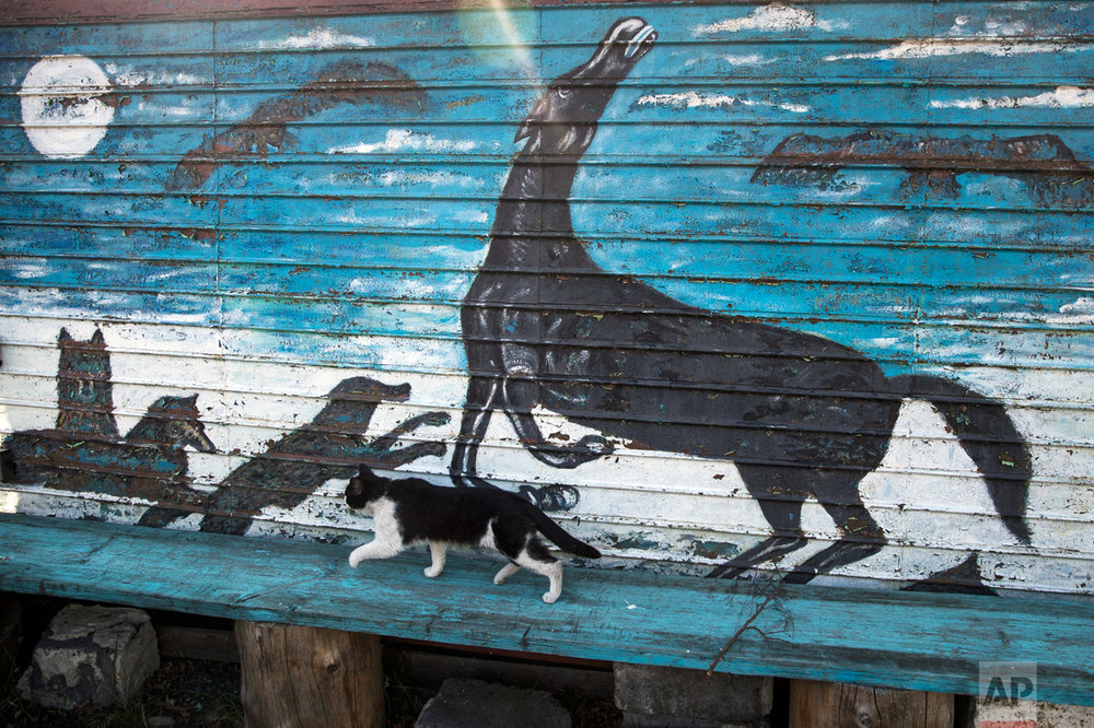 In this photo taken on Wednesday, May 3, 2017, a cat passes Mikhail Korhunov's painting on wall of a house in the village of Severnaya Griva, about 130 kilometers (80 miles) east of Moscow, Russia. (AP Photo/Pavel Golovkin)