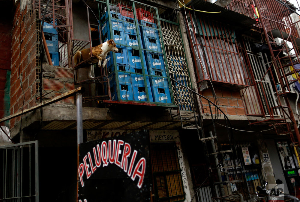 In this April 25, 2017 photo, a dog rests on a spiral staircase that leads to a home in the Villa 31 slum in Buenos Aires, Argentina. An estimated 275,000 people live in the roughly 50 informal housing settlements in Buenos Aires, which have mushroomed and spread chaotically with little planning or regulation. The improvised homes often lack basic public services and inhabit labyrinths of mostly unpaved streets and tangled power cables. (AP Photo/Natacha Pisarenko)