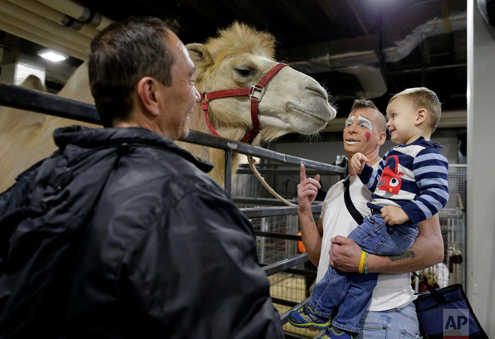 "Ringling Bros. boss clown Sandor Eke, center, holds his 2-year-old son Michael up to pet a camel before performing in a show, Friday, May 5, 2017, in Providence, R.I. ""When you're a circus kid you have your own zoo,"" said Eke. (AP Photo/Julie Jacobson)"