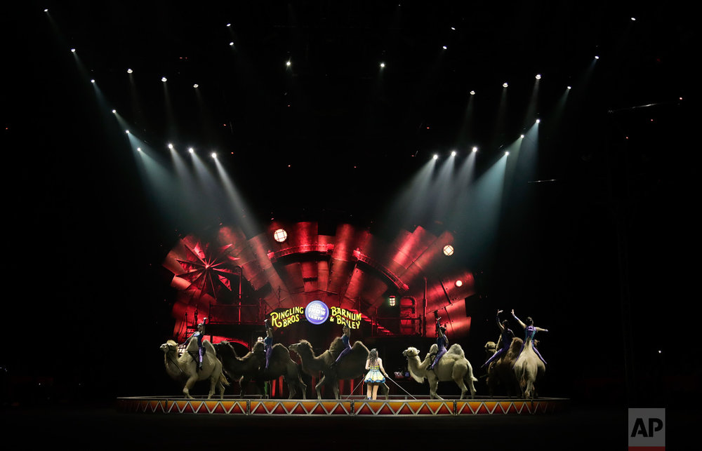 "The Desert Goddesses perform on camels during a show, Thursday, May 4, 2017, in Providence, R.I. ""The Greatest Show on Earth"" is about to put on its last show on earth. For the performers who travel with the Ringling Bros. and Barnum & Bailey Circus, its demise means the end of a unique way of life for hundreds of performers and crew members. (AP Photo/Julie Jacobson)"