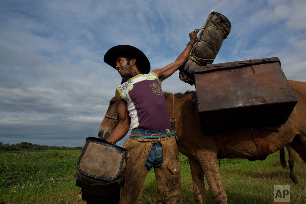"In this May 17, 2017 photo, cowboy cook Odair Batista carries a case with food in Corumba, the Pantanal wetlands of Mato Grosso do Sul state, Brazil. Dressed with leather chaps on top of their jeans, stetson hats and a machete attached to their waists, before setting off, the men finish their breakfast with Terere, an herbal ""mate"" beverage served ice cold in an ox drinking horn. (AP Photo/Eraldo Peres)"