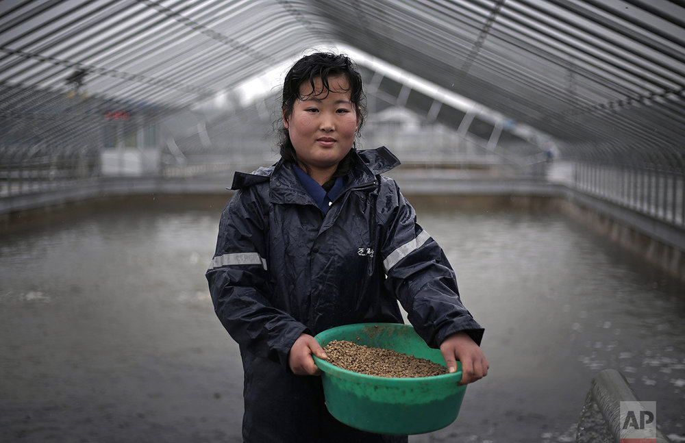 "In this April 17, 2017, photo, Kim Jin Ok, 25, poses for a portrait as she feeds catfish at the Pyongyang Catfish Farm, in Pyongyang, North Korea. Her motto: ""Working hard at my job pleases our leader Kim Jong Un."" (AP Photo/Wong Maye-E)"