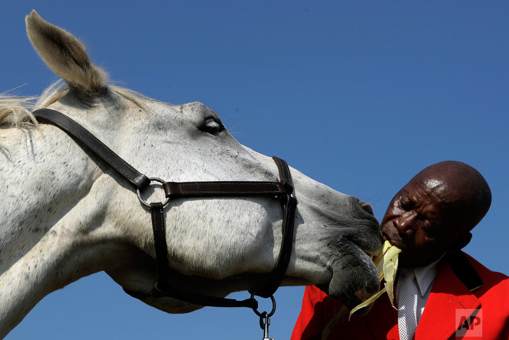 "In this Tuesday, March 14, 2017 photo, Enos Mafokate, feeds his horse named ""Vuka Zenzele"" at the Soweto Equestrian Centre in Johannesburg, South Africa. (AP Photo/Themba Hadebe)"