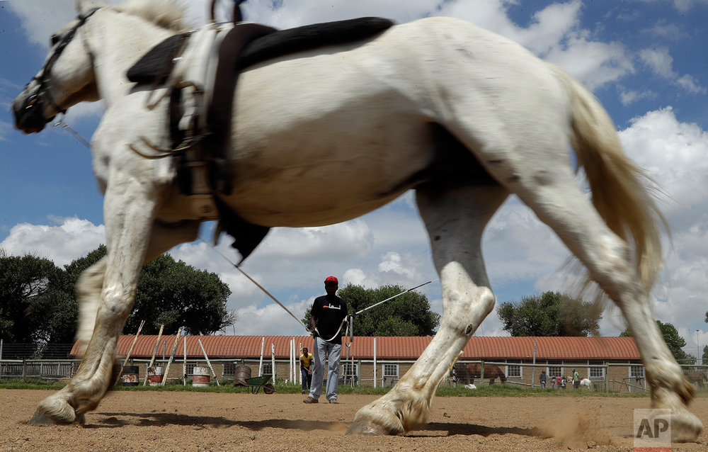 "In this Saturday, Feb. 11, 2017 photo, Enos Mafokate prepares ""Vuka Zenzele"" for equestrian vaulting at the Soweto Equestrian Centre in Johannesburg, South Africa. (AP Photo/Themba Hadebe)"