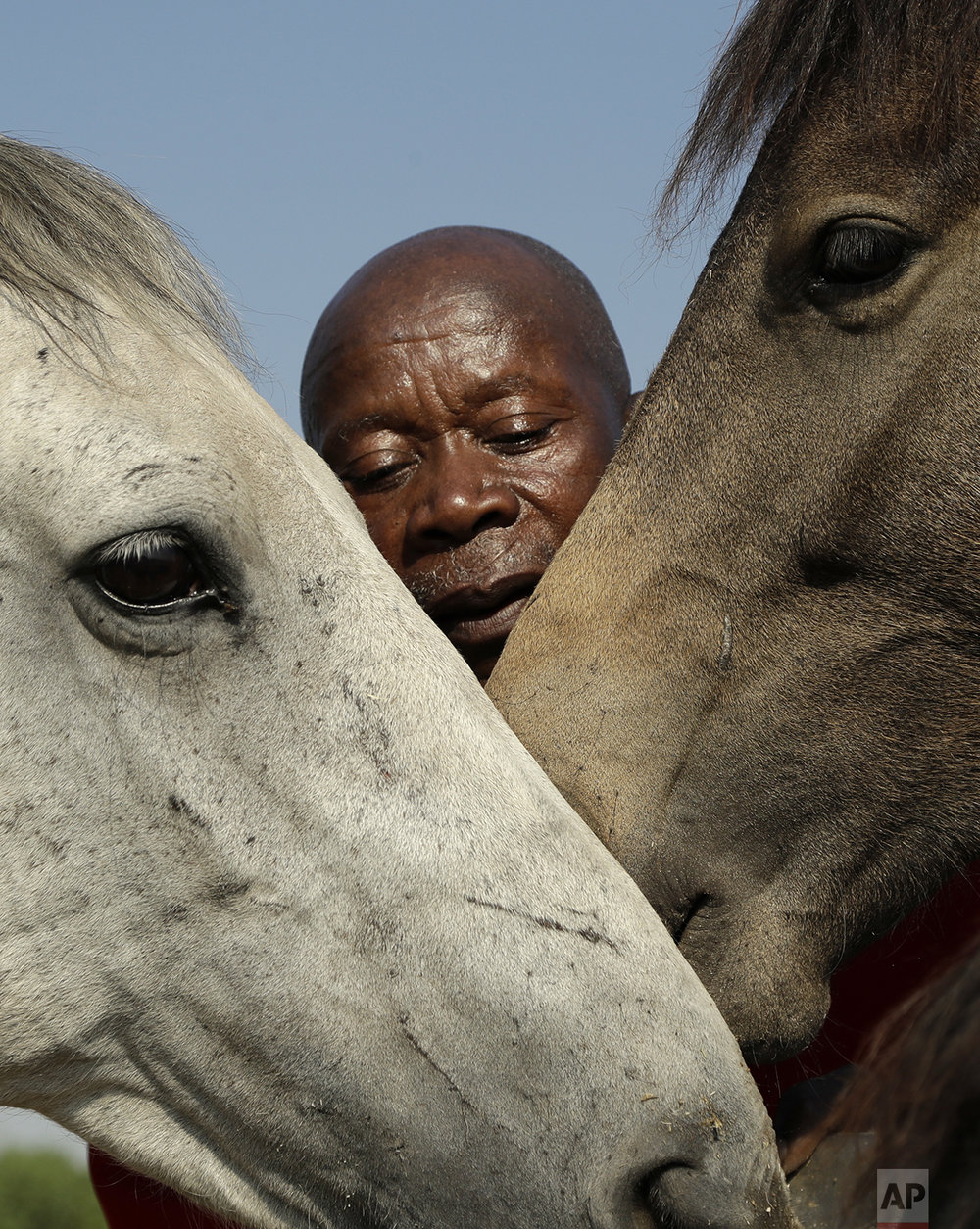 In this Tuesday, March 14, 2017 photo, Enos Mafokate embraces his horses at the Soweto Equestrian Centre in Johannesburg, South Africa. The respect displayed at Mafokate's equestrian center in Soweto is a far cry from the tensions under South Africa's previous apartheid system of racial discrimination that erupted into violence more than 40 years ago Friday, when dozens of protesting black students were killed by security forces in the 1976 Soweto uprising.  (AP Photo/Themba Hadebe)