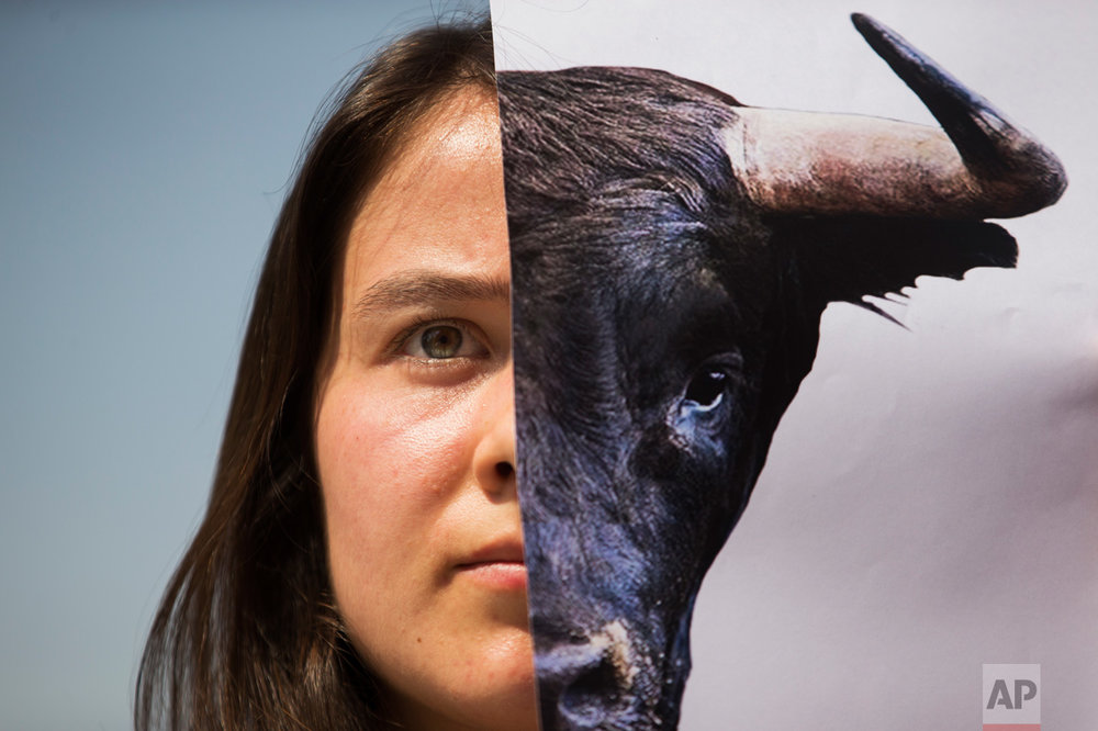 A demonstrator holds up a picture of a bull during a protest against bullfighting in Madrid, Wednesday, June 21, 2017. For some people bullfighting is a traditional spectacle in Spain but animal rights activists see it as torture against animals. (AP Photo/Francisco Seco)
