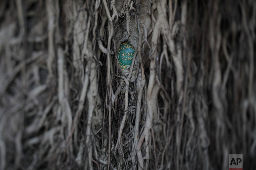 In this May 31, 2017, photo made with a tilt-shift lens, the roots of an old banyan tree covers a wall and a plaque at Britain's King George V Memorial Park in Hong Kong. (AP Photo/Vincent Yu)
