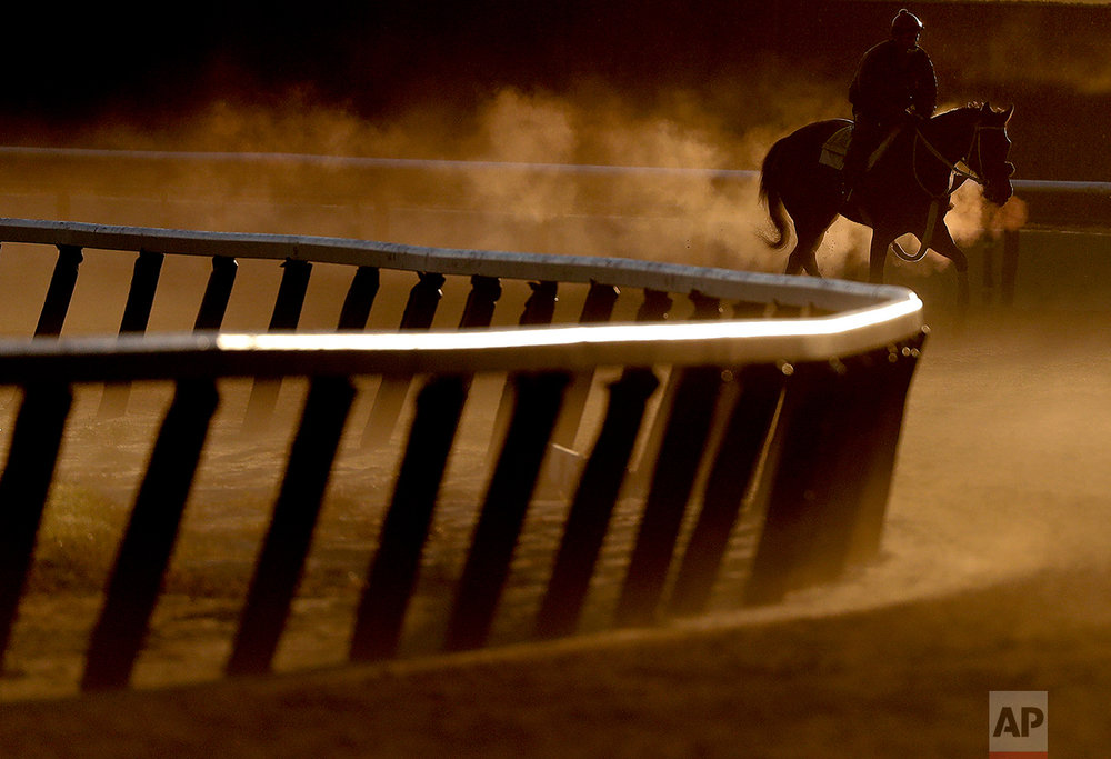 An exercise rider guides a race horse around the track during a workout, Friday, June 9, 2017, in Elmont, N.Y. The 149th running of the Belmont Stakes horse race is on Saturday. (AP Photo/Julie Jacobson)